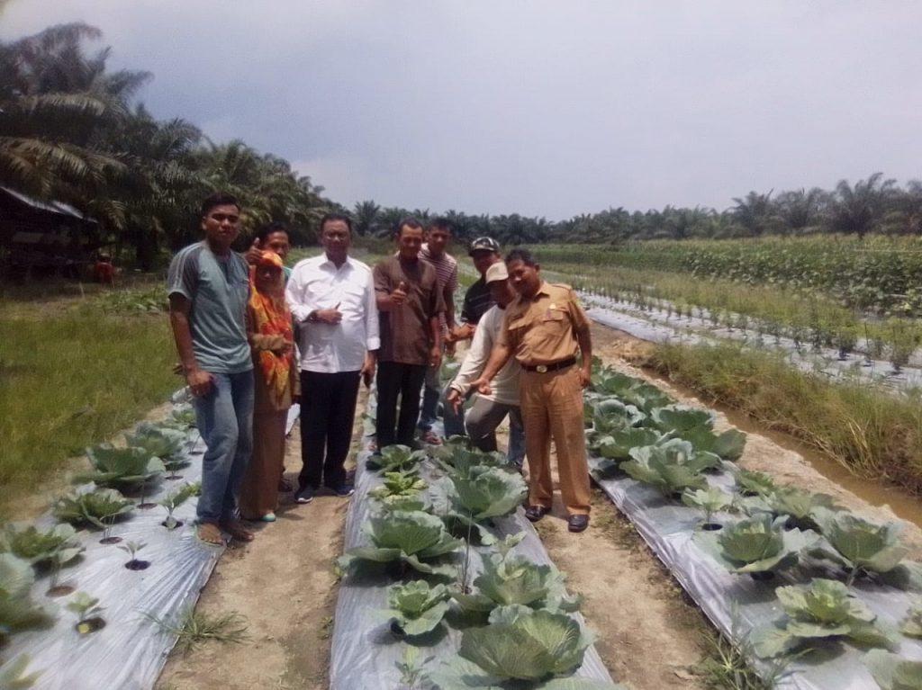 Bupati Rohil Suyatno Tinjau Tanaman Holtikultura Di Kecamatan Batu Hampar