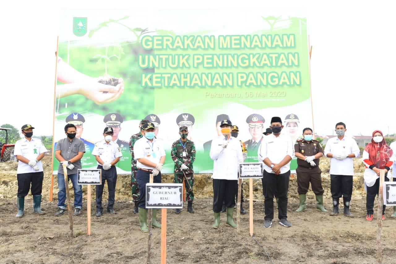 Bupati Kampar Mendampingi Gubernur Riau Melakukan Gerakan Menanam Untuk Peningkatkan Ketahanan Pangan