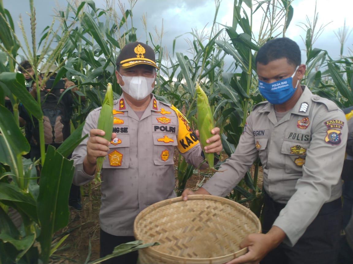 Panen Raya Program Jaga Kampung, Polda Riau Gandeng Persatuan Pedagang Jagung Bakar Pekanbaru