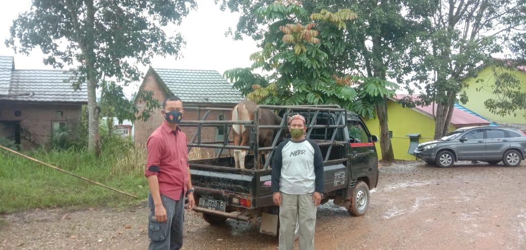 Pencurian Ternak Sapi di Tandun Berhasil Di Gagalkan Warga,2 Pelaku Berhasil Kabur