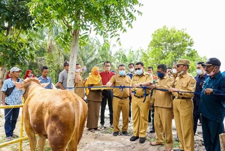 Bupati Kampar Resmikan Pasar Ternak Di Desa Sei Lembu Makmur